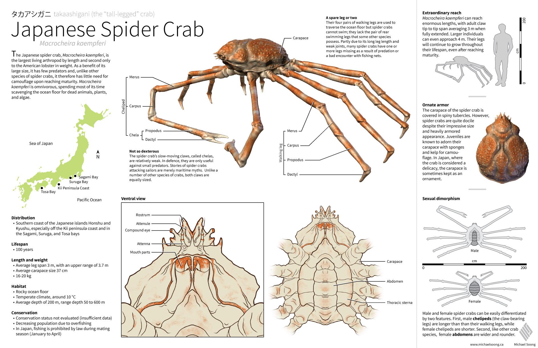 1990 alfa romeo spider wiring diagram sea spider diagram michael soong - biomedical communicator #14